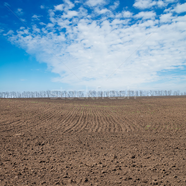 black ploughed field under deep blue sky Stock photo © mycola