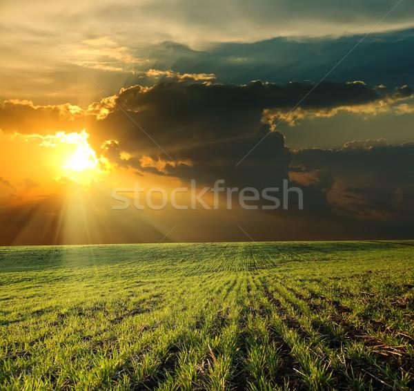 sunset over green field Stock photo © mycola
