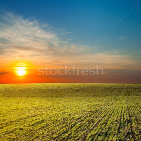 last sunrays under green field Stock photo © mycola