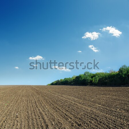 ploughed field in spring and blue sky Stock photo © mycola