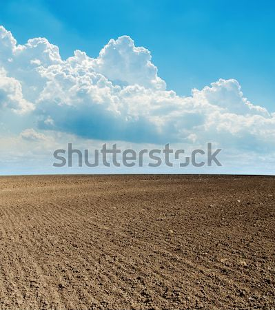 black plowed field after harvesting and blue cloudy sky Stock photo © mycola
