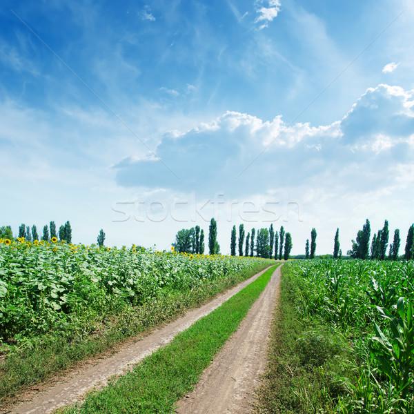Kırsal yol yeşil alanları mavi bulutlu Stok fotoğraf © mycola