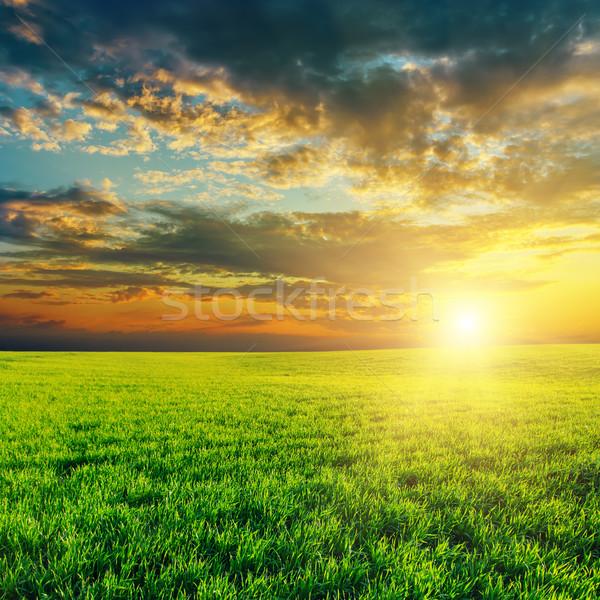 Agricultura verde campo pôr do sol céu primavera Foto stock © mycola