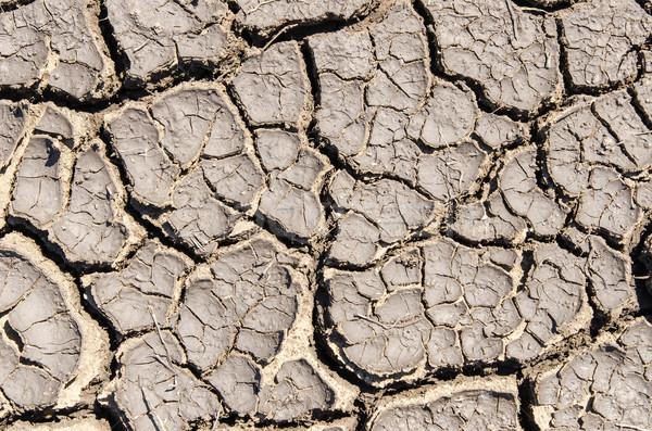 Secar rachado terra textura abstrato Foto stock © mycola