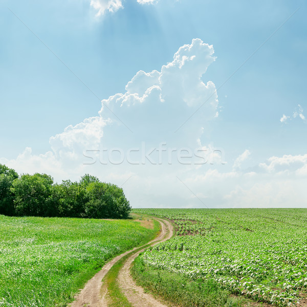 winding rural road in green grass and light clouds Stock photo © mycola