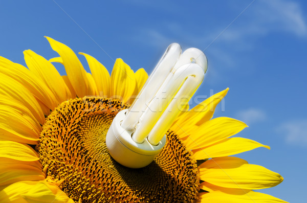 energy saving lamp in sunflower Stock photo © mycola