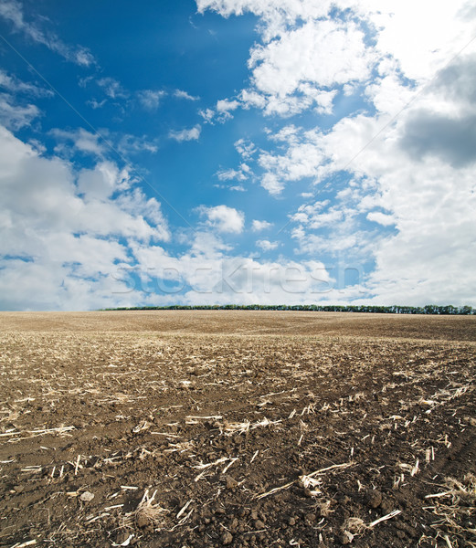 black ploughed field under blue cloudy sky after harvesting Stock photo © mycola