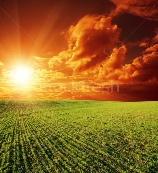 Rolniczy zielone dziedzinie wygaśnięcia niebo wiosną Zdjęcia stock © mycola