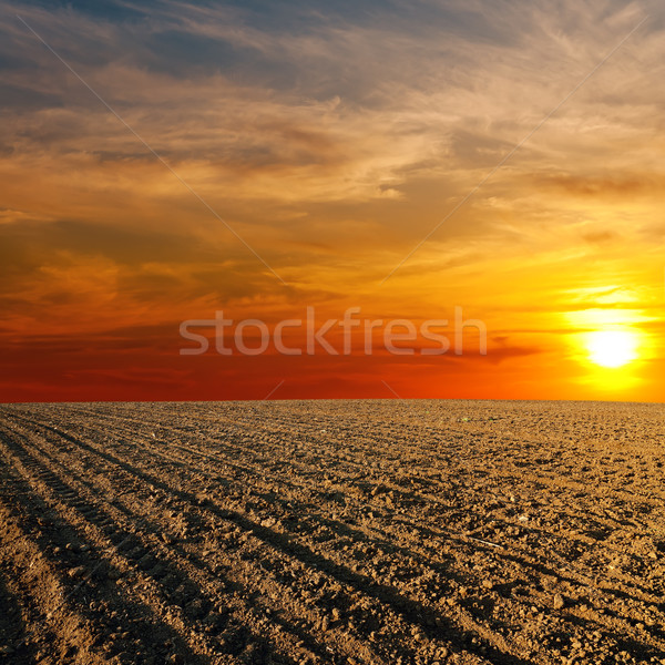 red sunset over ploughed farm field Stock photo © mycola