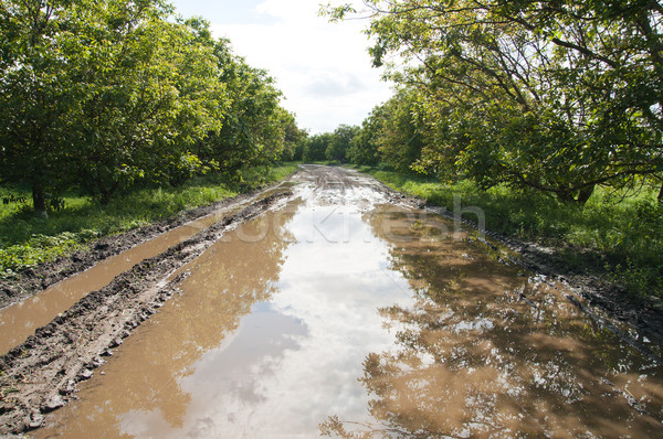 rural road with big puddle Stock photo © mycola