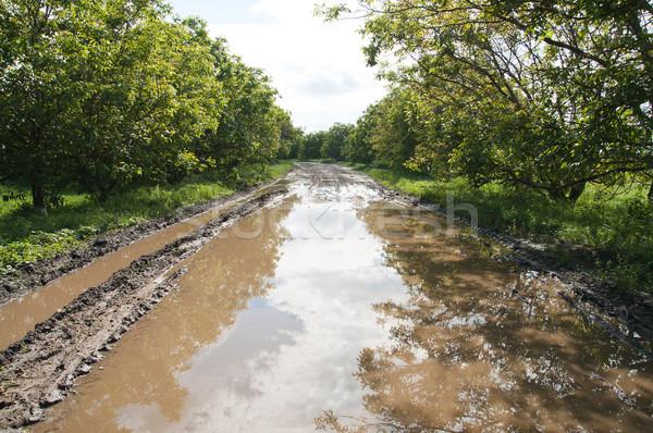 Vidéki út nagy pocsolya víz tavasz Stock fotó © mycola