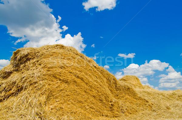straw Stock photo © mycola