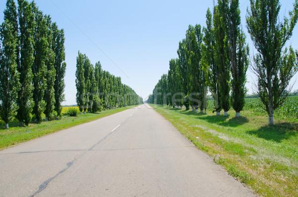 road to horizon in trees Stock photo © mycola