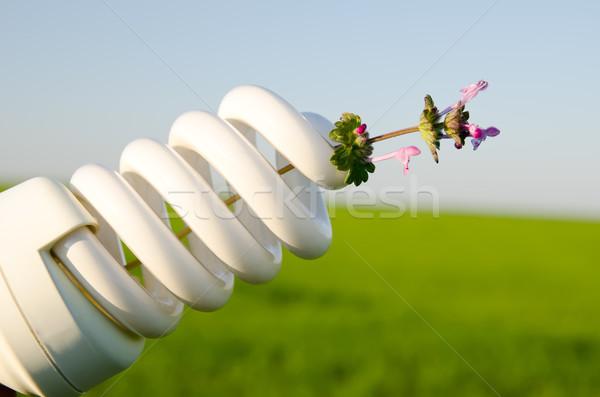 energy saving lamp with flower Stock photo © mycola