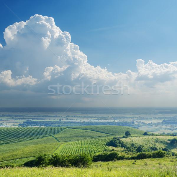Regenachtig wolken wijngaard hemel natuur veld Stockfoto © mycola