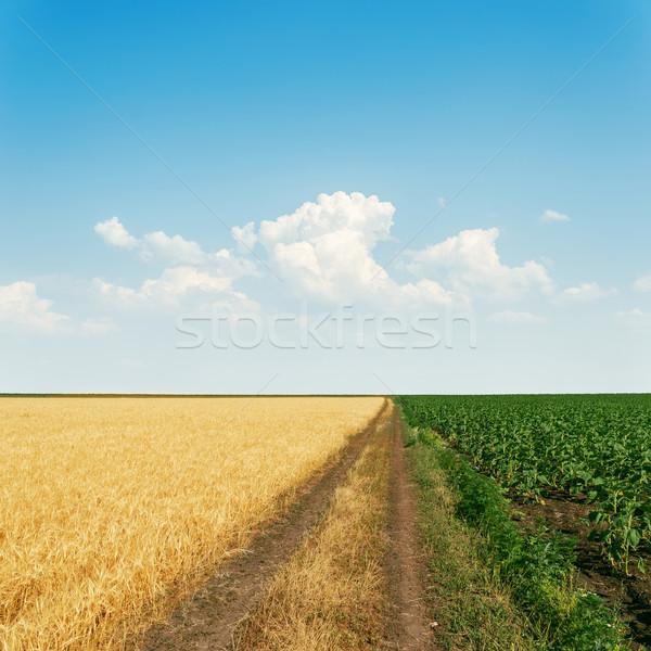 Koszos út mezőgazdasági mezők égbolt felhők Stock fotó © mycola