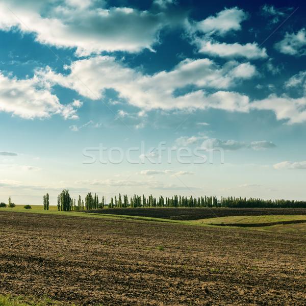 области драматический небе дерево пейзаж Сток-фото © mycola