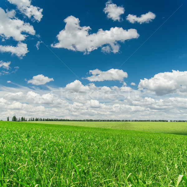 green grass field and deep blue sky with clouds Stock photo © mycola
