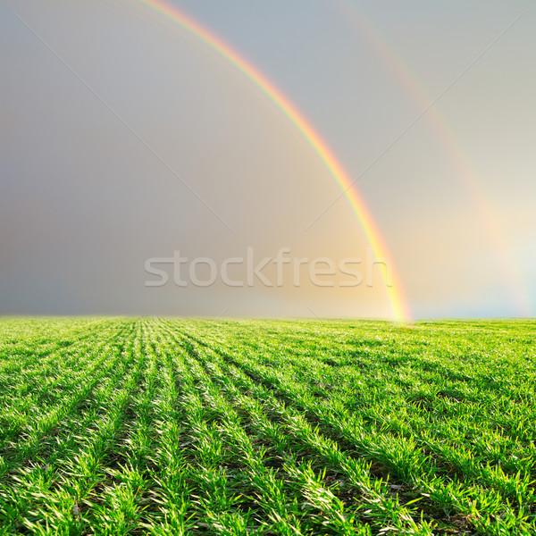 Verde campo Rainbow grigio cielo primavera Foto d'archivio © mycola