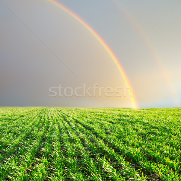 green field and rainbow in grey sky Stock photo © mycola