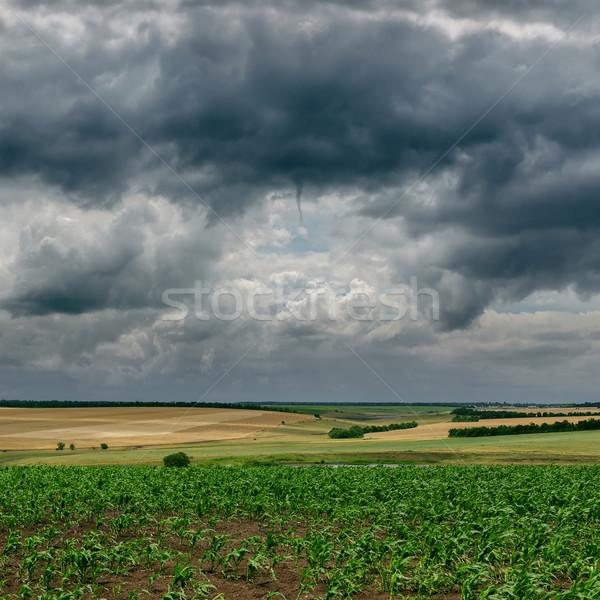 dark cloudy sky and green field Stock photo © mycola
