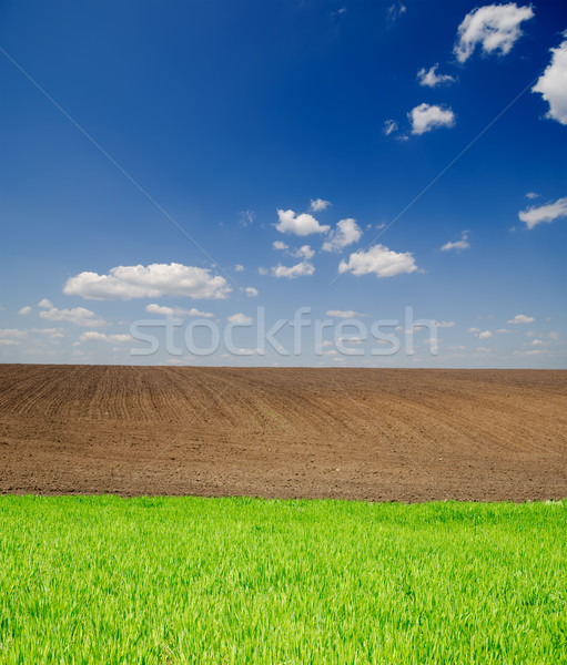 agricultural green and black field Stock photo © mycola