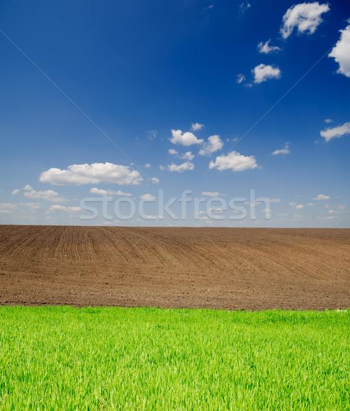 Rolniczy zielone czarny dziedzinie głęboko Błękitne niebo Zdjęcia stock © mycola