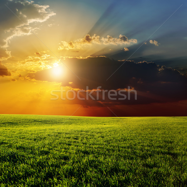 dramatic sunset over agricultural green field Stock photo © mycola
