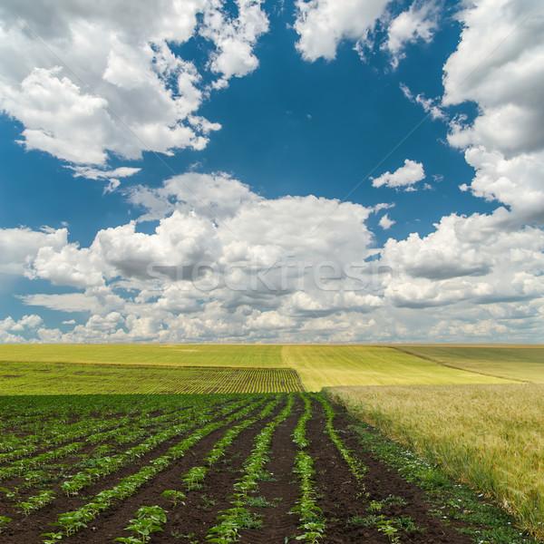 cloudy sky over spring field Stock photo © mycola