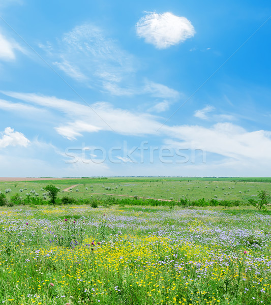 sunny day on green landscape with flowers and blue sky with clou Stock photo © mycola