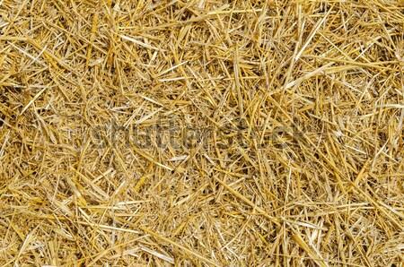 Stro voedsel gras zomer veld boerderij Stockfoto © mycola