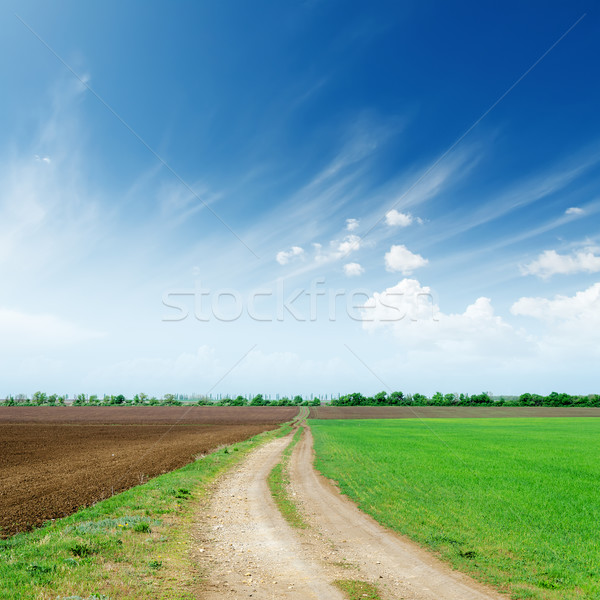 rural road in fields to cloudy horizon Stock photo © mycola