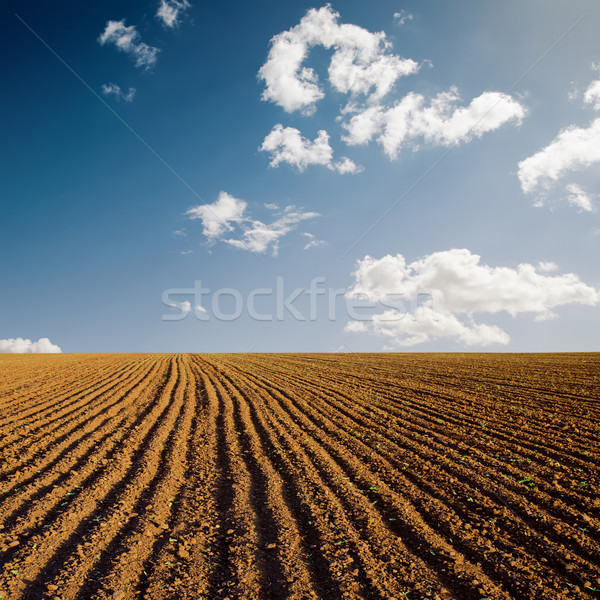 plowed field and blue sky in sunset Stock photo © mycola
