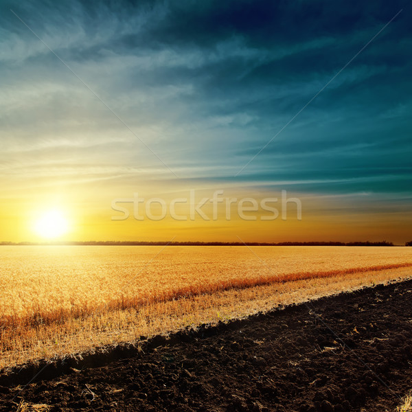 sunset over harvest field Stock photo © mycola