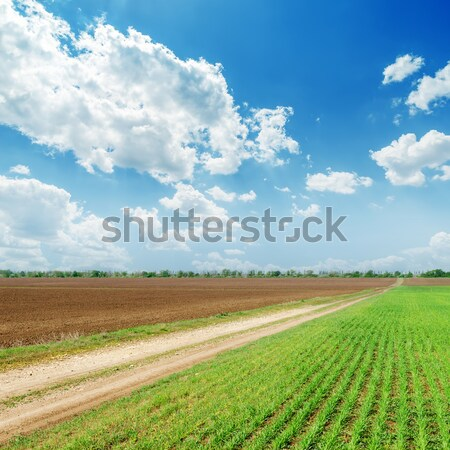 green field with road and clouds in blue sky Stock photo © mycola