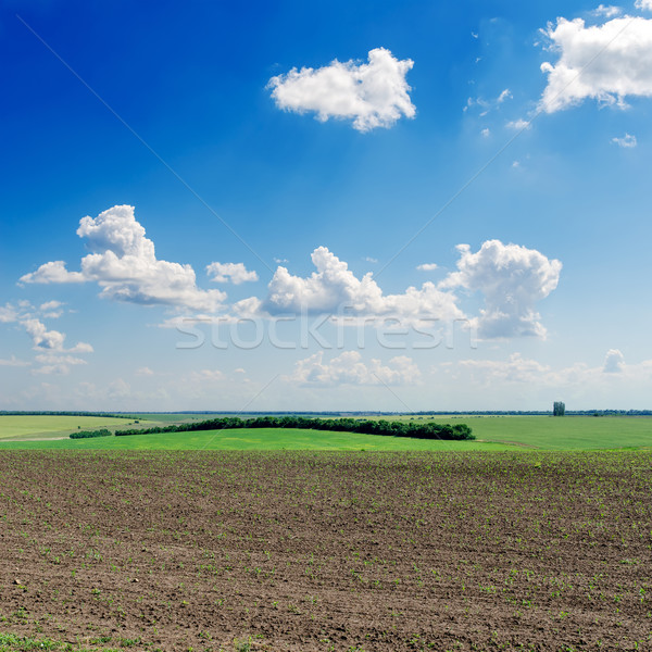 black ploughed field under deep blue sky Stock photo © mycola
