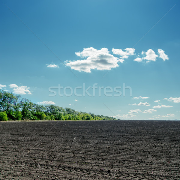 black field under cloudy blue sky Stock photo © mycola
