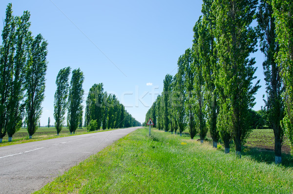 Stock photo: rural road with trees near it board