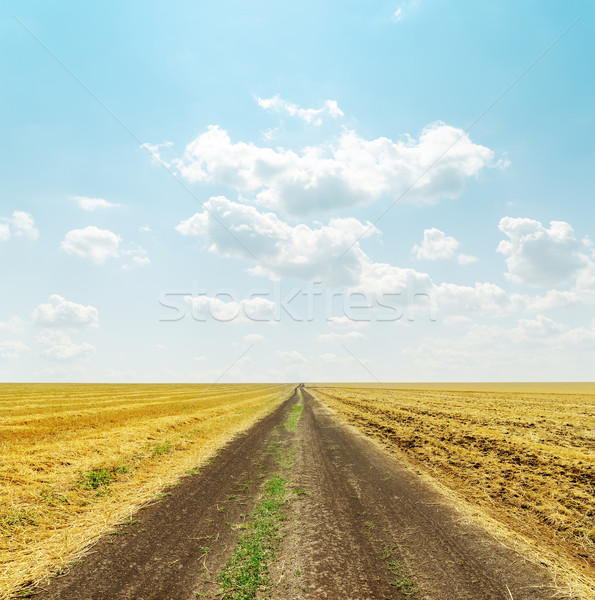 road in golden field and clouds over it Stock photo © mycola