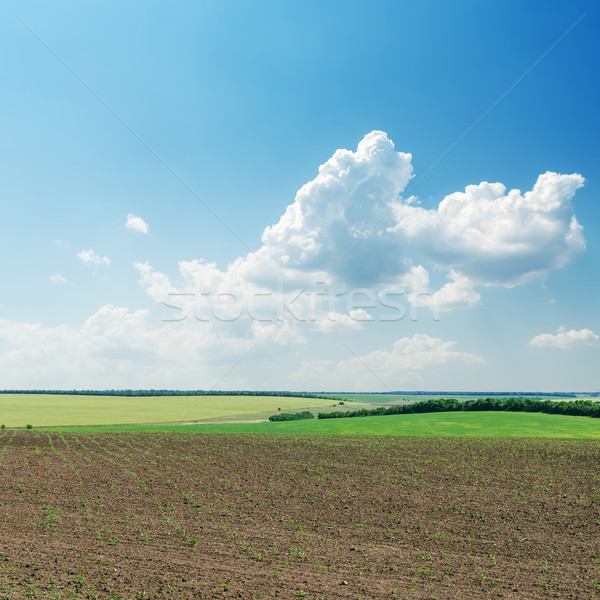 plowed field in spring under cloudy sky Stock photo © mycola