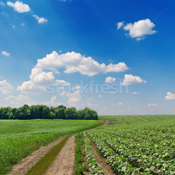 rural road in green fields and cloudy sky Stock photo © mycola