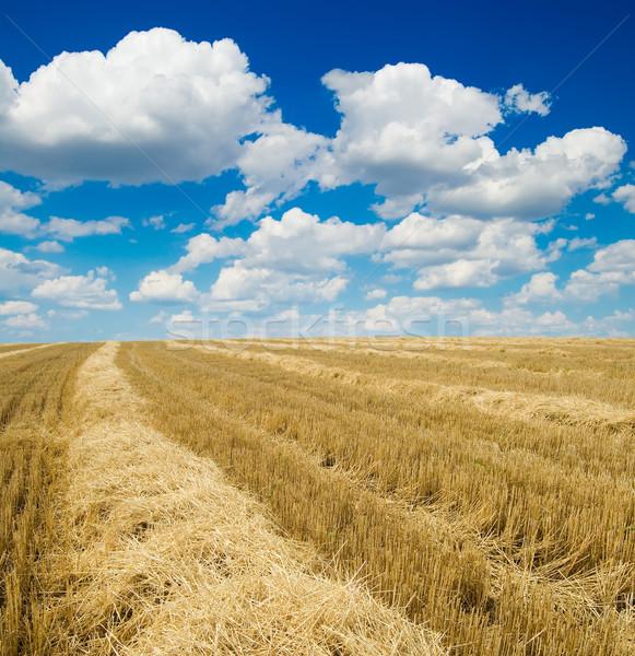 Colheita nublado céu natureza paisagem campo Foto stock © mycola