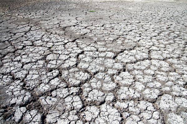 dry cracked earth Stock photo © mycola