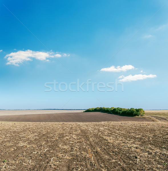 plowed field in autumn under light cloudy sky Stock photo © mycola