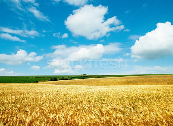 Złoty dziedzinie mętny niebo krajobraz tle Zdjęcia stock © mycola