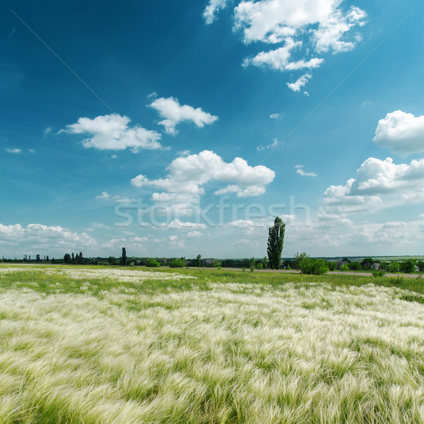 green mat grass and blue sky Stock photo © mycola