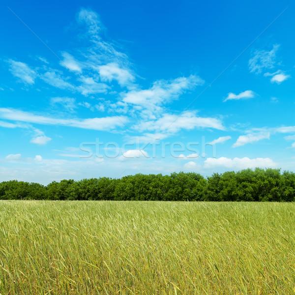 Campo verde orzo nuvoloso cielo primavera Foto d'archivio © mycola
