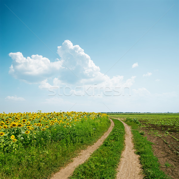dirty road to horizon in agriculture fields and clouds over it Stock photo © mycola