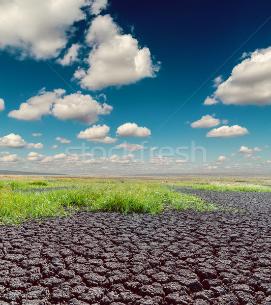 desert with green grass under dramatic sky and low clouds Stock photo © mycola