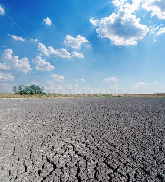 drought land under cloudy sky Stock photo © mycola